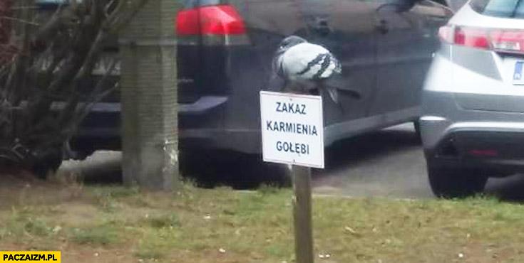 Zakaz karmienia gołębi gołąb siedzi na zakazie znaku