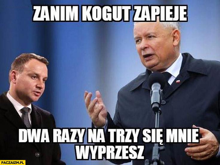 Zanim kogut zapieje dwa razy się mnie wyprzesz Kaczyński Duda