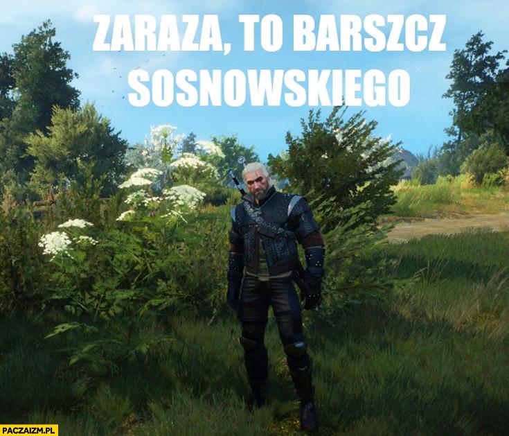 Zaraza to barszcz Sosnowskiego Wiedźmin