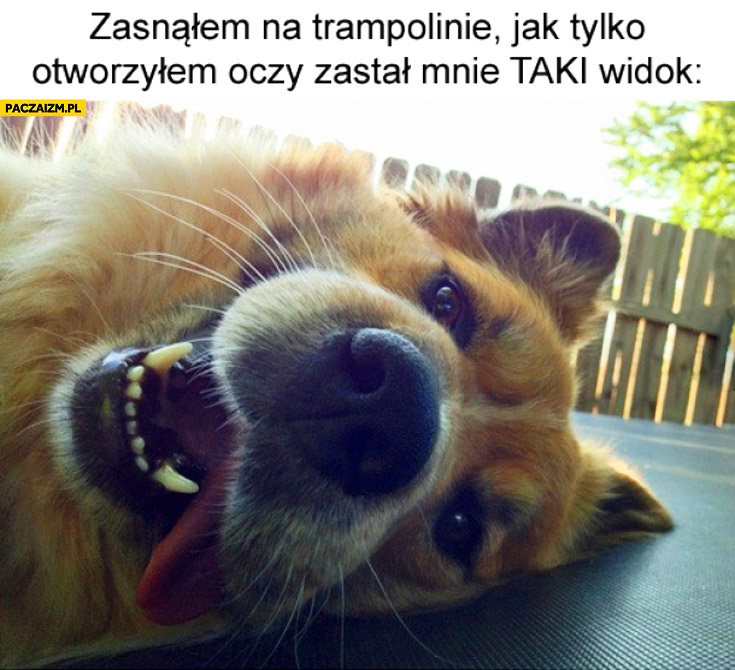 Zasnąłem na trampolinie jak tylko otworzyłem oczy zastał mnie taki widok pies