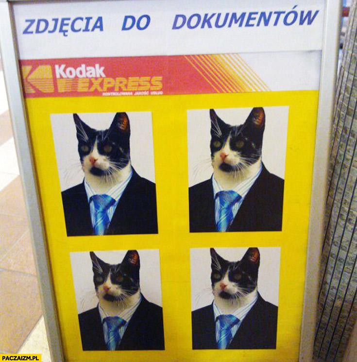Zdjęcia do dokumentów kot
