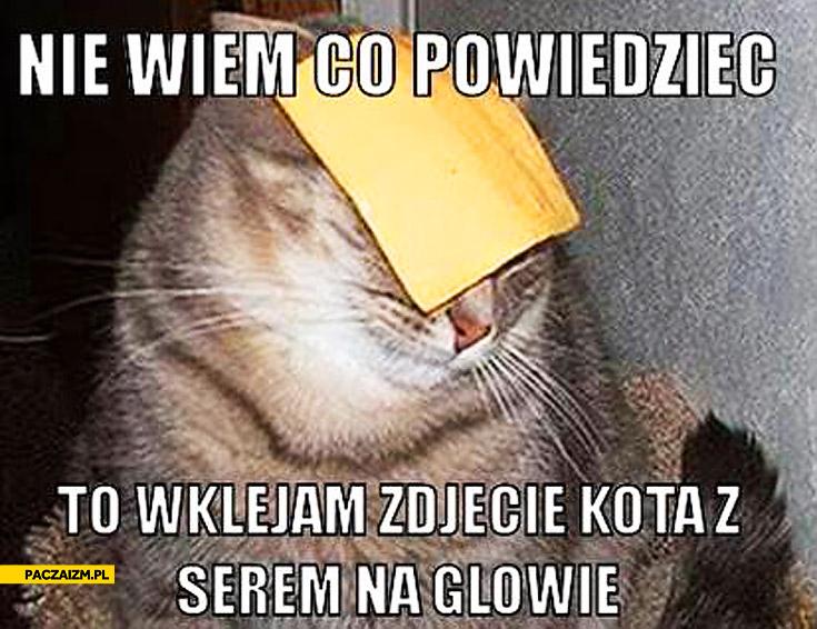 Zdjęcie kota z serem na głowie nie wiem co powiedzieć