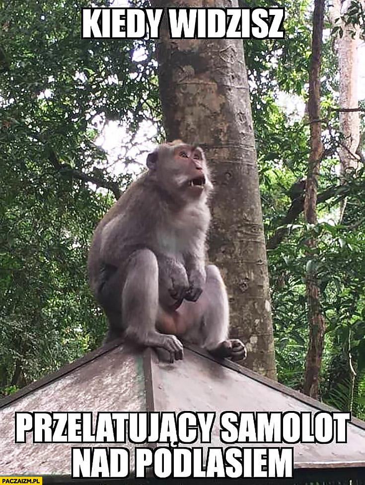 Zdziwiona małpa kiedy widzisz przelatujący nad Podlasiem samolot