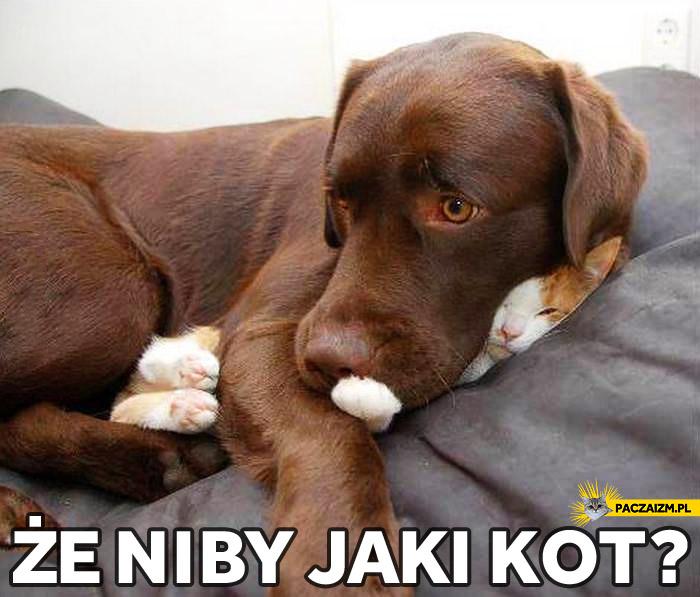 Że niby jaki kot?