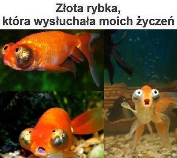 Złota rybka która wysłuchała moich życzeń przerażona zdziwiona