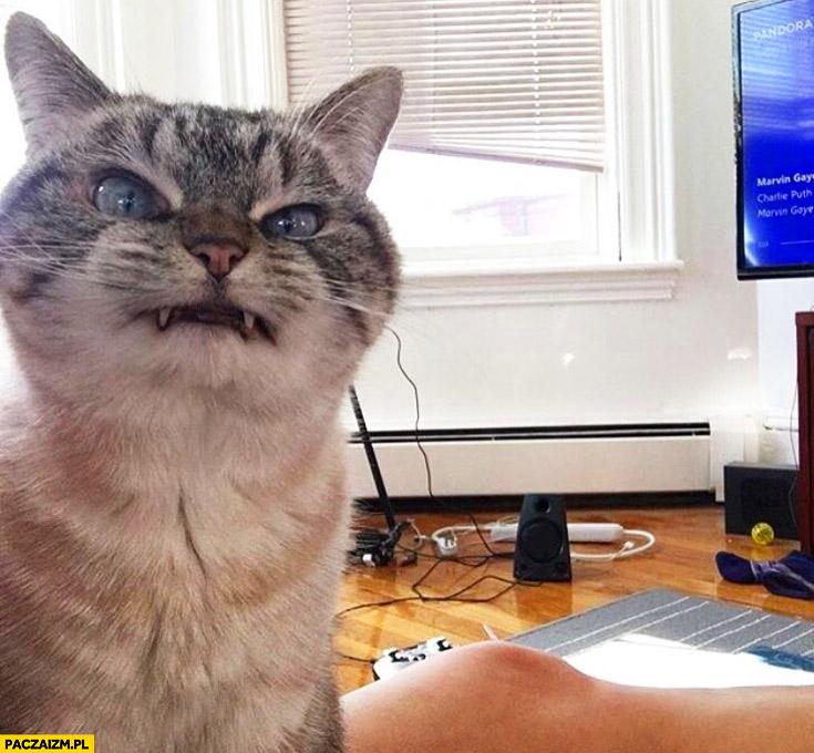 Złowieszczy uśmiech kota mina