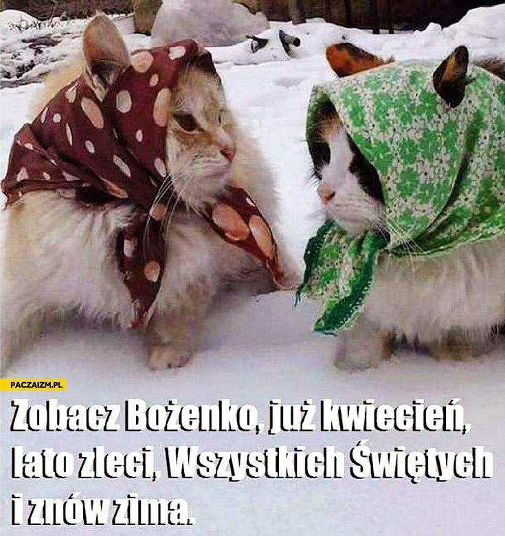Zobacz Bożenko już kwiecień lato zleci Wszystkich Świetych i znowu zima koty
