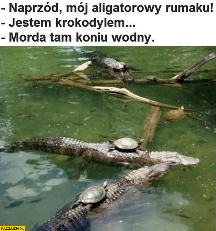 Żółw na krokodylu naprzód mój aligatorowy rumaku, jestem krokodylem, morda tam koniu wodny