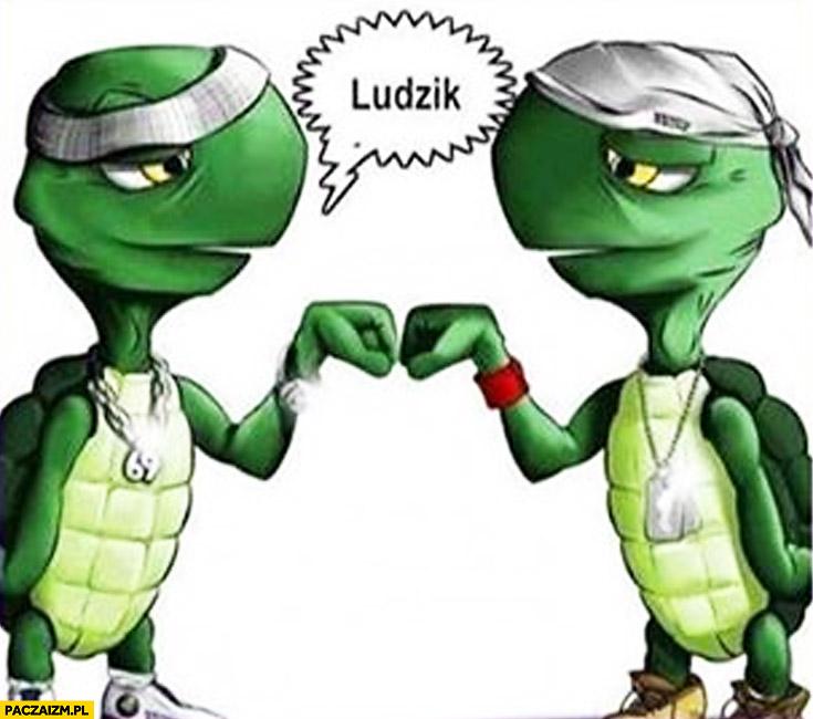 Żółwie przybijają piątkę ludzik żółwik