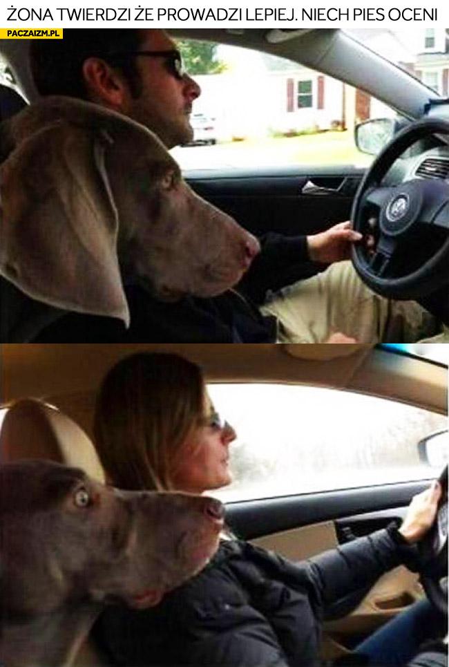 Żona twierdzi że prowadzi lepiej niech pies oceni