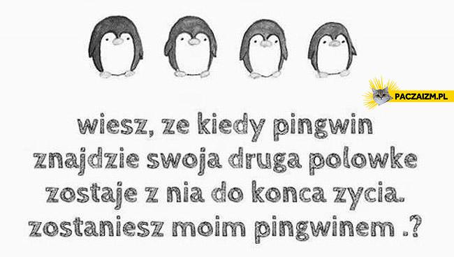 Zostaniesz moim pingwinem?