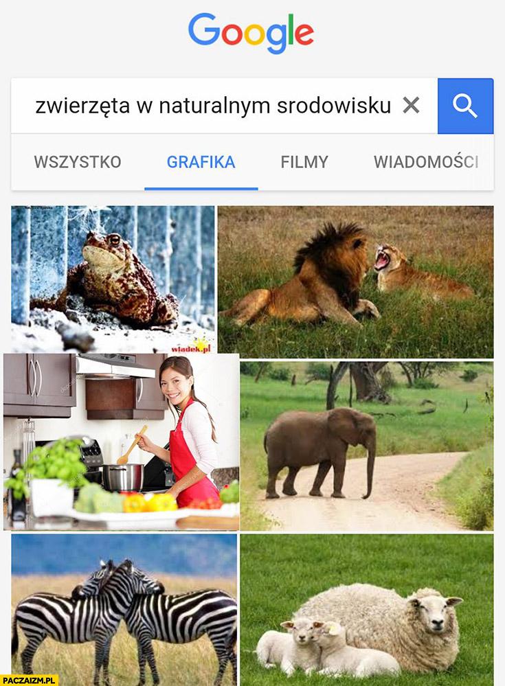 Zwierzęta w naturalnym środowisku Google grafika zdjęcia kobieta w kuchni