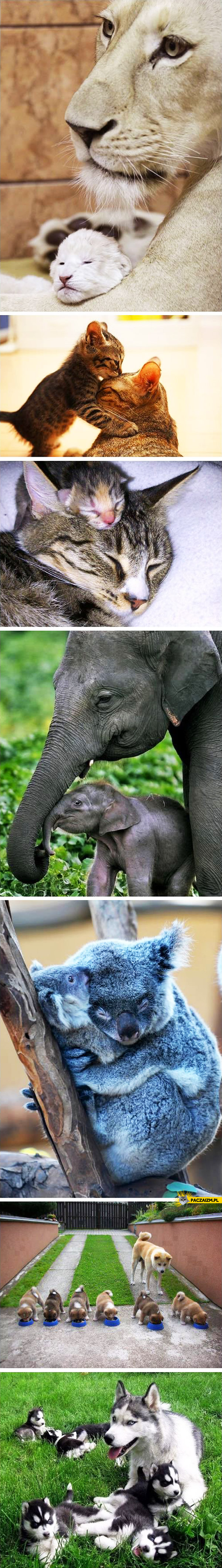 Zwierzęta z młodymi