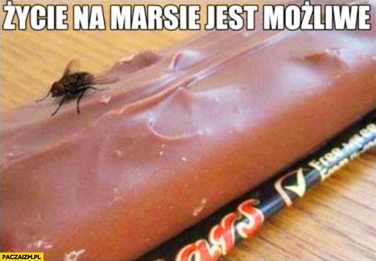 Życie na marsie jest możliwe mucha